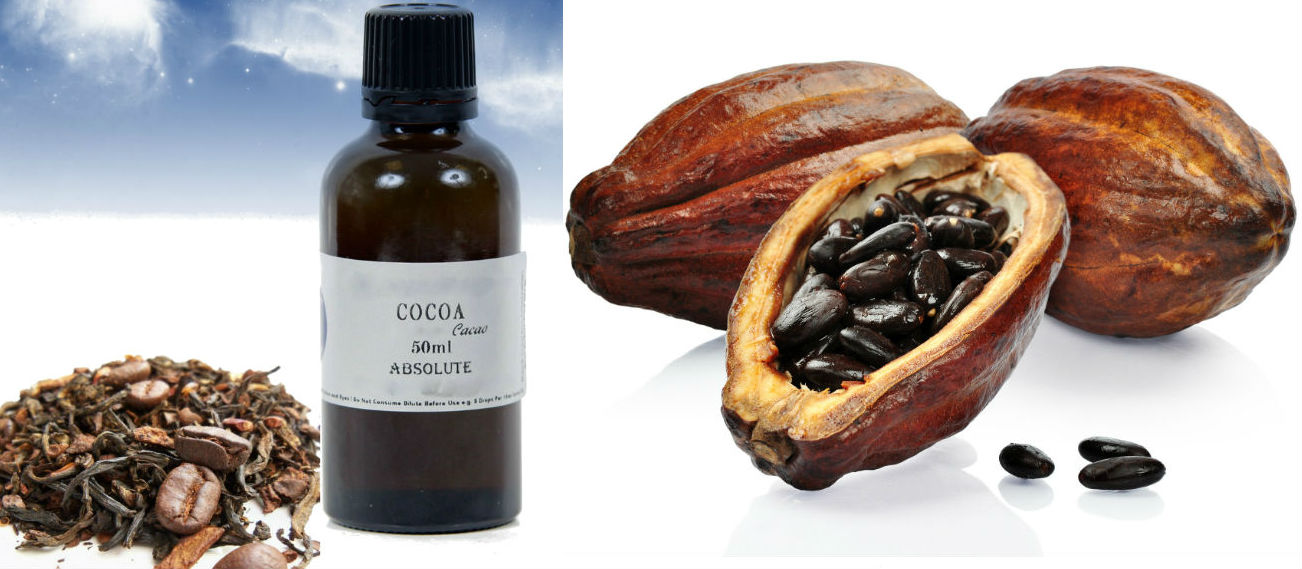 Cocoa Absolute Oil